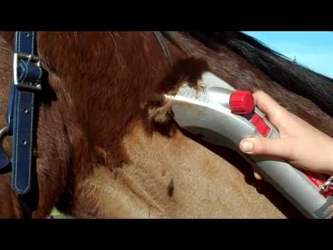 guide to grooming horses